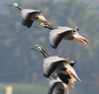 Birds from my Camera Cannon EOS600D